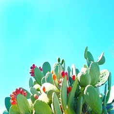 Out for a nice walk in our warm weather and found this gorgeous cactus!  What do you do while walking? I usually love to think.  that's what I get for being an #intj  Butner I was thinking about the different roles we play as bloggers.  Can you easily finish the sentence?  My favorite things to do in my business are ______________________.  My least favorite things are ____________________.  What's your favorite part of your business?  If you could strip away ALL the roles you play in your…