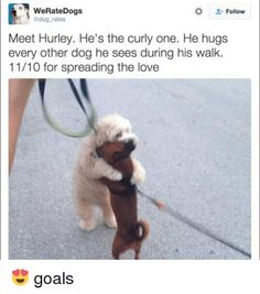 """42 Hilarious Animal Memes That Are So Cute You're Gonna Die - Funny memes that """"GET IT"""" and want you to too. Get the latest funniest memes and keep up what is going on in the meme-o-sphere. Funny Dog Memes, Memes Br, Funny Animal Memes, Cute Funny Animals, Cat Memes, Funny Dogs, Cute Dogs, Hilarious Quotes, Awesome Dogs"""