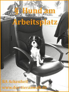 hund Arbeitsplatz Hunderecht Tier - Anwalt Ackenheil http://www.der-tieranwalt.de
