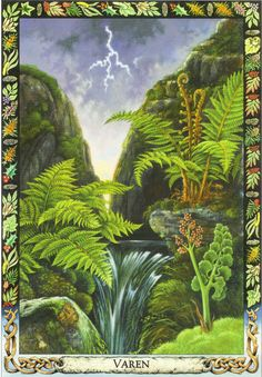 Fern | Druid Plant Oracle by Philip and Stephanie Carr | Illustrated by Will Worthington | Meaning: vitality, sensuality and fertility | Reversed: invisibility, subtlety and self-effacement