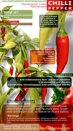 Chilli pepper benefits. Infographic