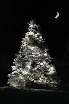 6539d77c4908bbf52bf44109a11638e6  winter night winter snow