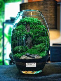 Moss Garden, Garden Plants, Indoor Plants, Terrarium Scene, Terrarium Plants, Container Plants, Container Gardening, Mini Bonsai, Paludarium