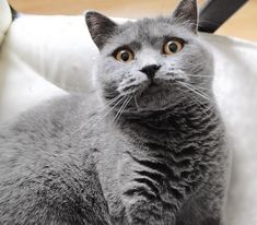 Funny Cat Wallpaper, Funny Cats, Animals, Animales, Animaux, Funny Kitties, Animal, Animais, Cute Cats