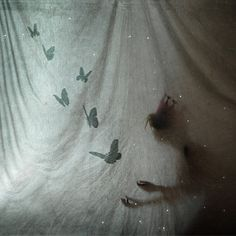 So ethereal... love the translucent drapes, the butterflies, and especially the shadow!