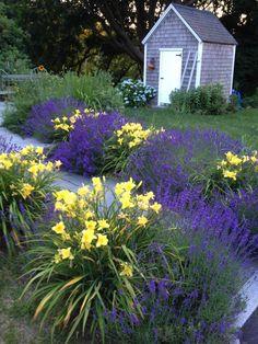 lavender garden 1