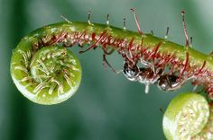 Nature Blows My Mind! Weird and Deadly Carnivorous Plants : TreeHugger