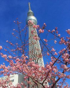 Tokyo SkytreeJapanTokyo Skytree is a broadcasting, restaurant, and observation tower in Tokyo. It became the tal. Japon Tokyo, Tokyo Skytree, Japan Travel Tips, Asia Travel, Travel Around The World, Around The Worlds, Destinations, Elves And Fairies, Culture Club
