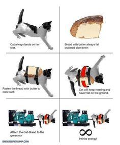 Troll Science Cat And Bread With Butter Click the image for even more on EndlessPicdump.com