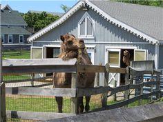 Block Island            #VisitRhodeIsland