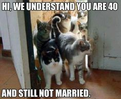 Crazy cat lady 'welcome committee'.
