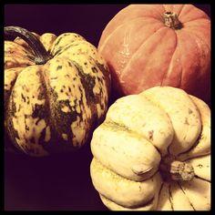 Happy Halloween! Pumpkins