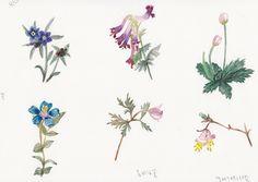 FLOWER FLOWER: 야생화 그려기 연습(plactice to watercolor wild flowers/ la...