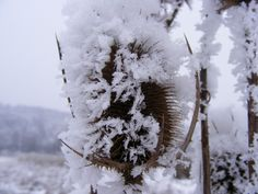 Thistle in Winter - Public Domain Photos, Free Images for Commercial Use