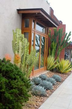 Austin we could interpret this with Jerusalem thorn trees for height, 'Color Guard' yuccas for yellow and green spikes, Agave parryi truncata (low, blue agaves), and rosemary or copper canyon daisy for the rounded green shrub in the foreground. Succulent Landscaping, Front Yard Landscaping, Succulents Garden, Landscaping Ideas, Mulch Landscaping, Backyard Ideas, Succulent Planters, Succulent Arrangements, Hanging Planters