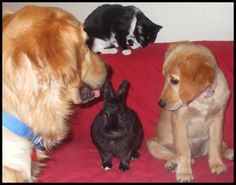 It is so hard to get the 4 of them together. The cat doesnt like the dogs and the pup is too rough with the very old rabbit.