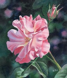 Watercolor Paintings of Roses | FAIR OF FACE (SOLD) watercolor rose floral painting by Barbara Fox