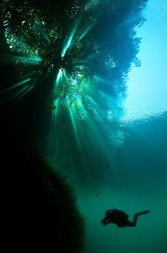Tree as seen from underwater