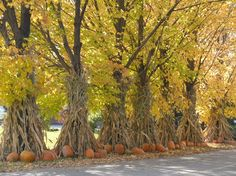 pumpkins, old corn stalks and beautiful golden leaves....