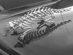 chromed armadillo skeleton***Research for possible future project.