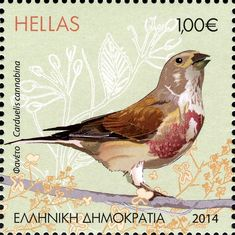 Common Linnet stamps - mainly images - gallery format Old Stamps, Vintage Stamps, Vintage Comic Books, Vintage Comics, Postage Stamp Collection, World Birds, Going Postal, Wild Creatures, Linnet