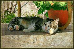 #kitty #porch #summer