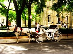 Chicago's Water Tower  A common scene near our store - the horse and carriage!