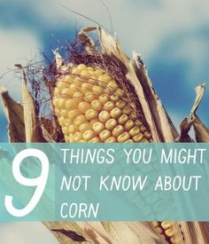 9 things you might not know about corn.... #americasfarmers