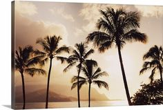 """Add a soothing sunset or a scenic view from the tropics to your space with the Hawaii Art Prints Collection. """"Hawaii, Kauai, Hanalei Bay, Palm Trees At Sunset"""" canvas print by MakenaStock Media, available at CanvasOnDemand.com."""