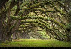 Avenue of Oaks Charleston SC Plantation Live Oaks