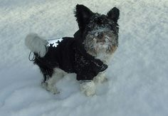 Sněhuláček Teddy!