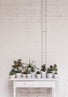 Méchant Studio Blog: plants' studio