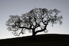 trees Wordpress Portfolio Themes
