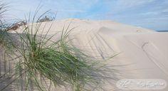 beach, coast, sand,