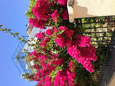 Beautiful flowers Poros Greece