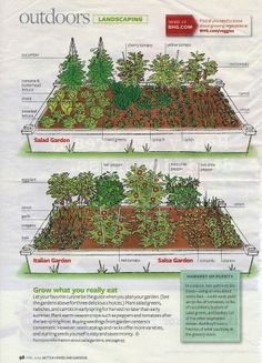 salad garden layout | love the layout of the Salad garden with the trellis' for the ...