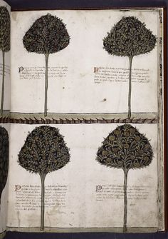Tacuinum Sanitatis, Four Trees, c. 1460. (A medieval handbook on health and well being.)