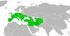 Neanderthal map; the 3 races in it