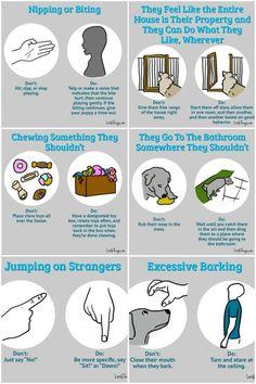 10 tricks to use when training a puppy #puppytrainingbiting