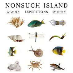 The 2016 Nonsuch Expeditions Biodiversity Photography — The Nonsuch Expeditions