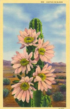 Vintage Desert Postcard - Cactus in Bloom - Unused Linen Postcard