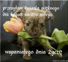 Nick Vujicic, Positive Affirmations, Motto, Bellisima, Good To Know, Animals And Pets, Good Morning, Jokes, Teddy Bear