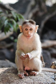 Baby Monkey in Goa!
