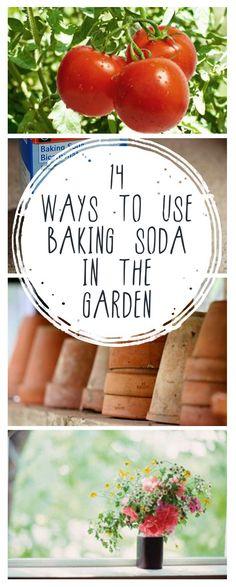 Baking soda uses for baking soda gardening hacks popular pin organic gardeni Hydroponic Gardening, Hydroponics, Vegetable Gardening, Gardening Hacks, Veggie Gardens, Flower Gardening, Organic Insecticide, Baking Soda Uses, Organic Gardening Tips