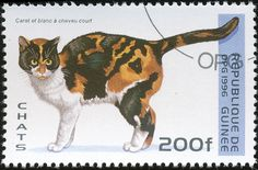 Republic of Guinea 1996 Cat Stamps