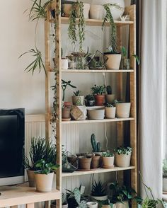 Indoor Plant Decor ideas are fun for people of all ages. You don't have to have a huge garden or your Indoor Plant Decor Ideas are perfect for small garden arrangements. There are many different plants that are suitable for… Continue Reading → Uo Home, Sweet Home, Plant Shelves, New Room, Plant Decor, Plant Wall, Indoor Plants, Room Inspiration, Bedroom Decor