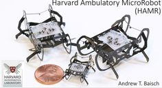 Researchers at the Harvard Microrobotics Lab have created insect-sized robots that can run and operate on their own power source. Harvard, Bugs, Insects, Robots, Engineers, High Speed, Lab, Technology, Future