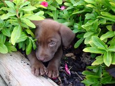puppy:)