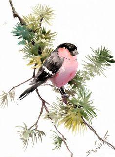 Bullfinch, Original watercolor painting, 12 X 9 in, bullfinch and pine tree, pink black green wall art on Etsy, $32.00