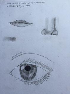 Facial features development